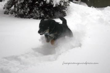 DeSoto jumping through the snow!