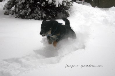 DeSoto jumping through the snow!