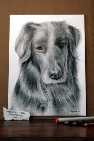 """Jerzey 9"""" x 12"""" graphite/colored pencil, copic markers, charcoal pencils"""