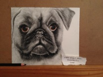 "So Pugly- 6"" x 8"" pencil and charcoal portrait"