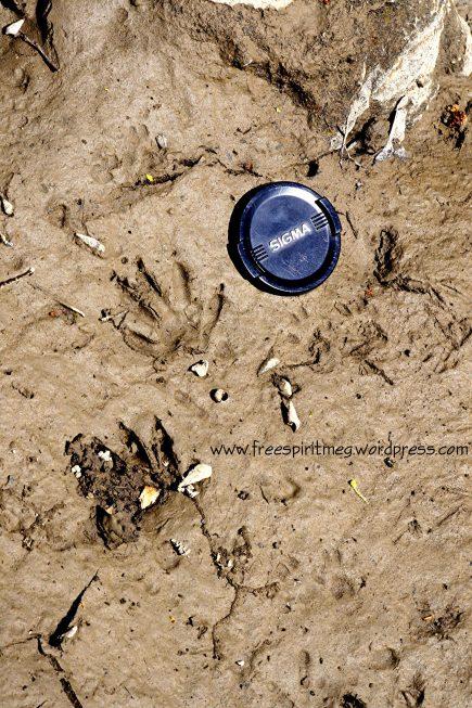 2016 Raccoon Tracks - Schuylerville, NY