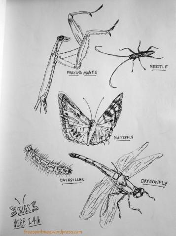 Bugs Study