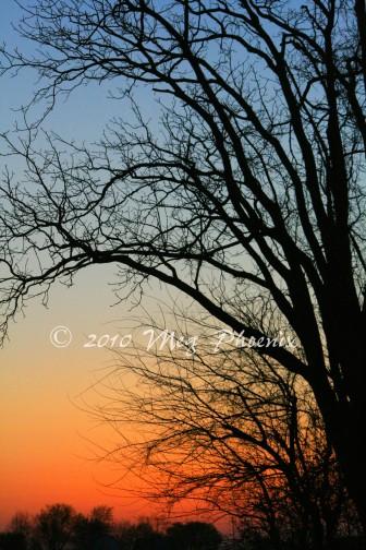IMG_3092 Goodnight Tree WM