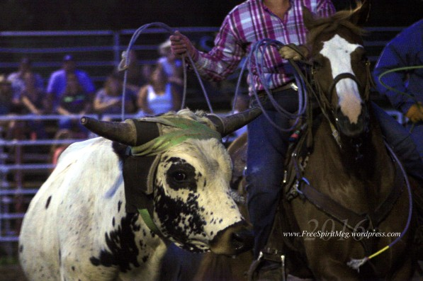 2016 DMRodeo1503