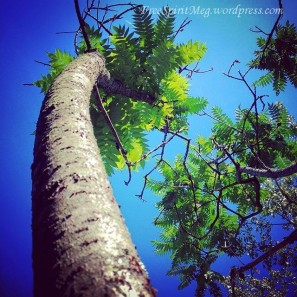 Looking Up To Trees
