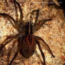 Big Ol' Spider