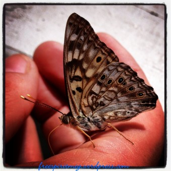 I am not 100% positive on the identification on this one but I believe it is a Speckled Wood Butterfly.