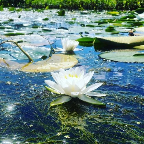 Nature sparkles!