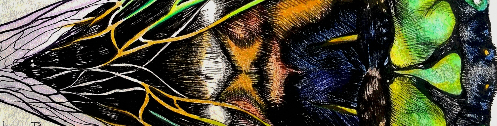 Totem Animal: Cicada – Free Spirit Meg