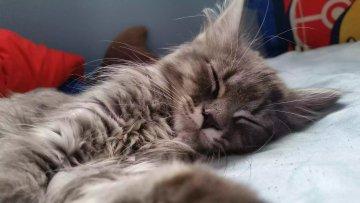 Snoozing