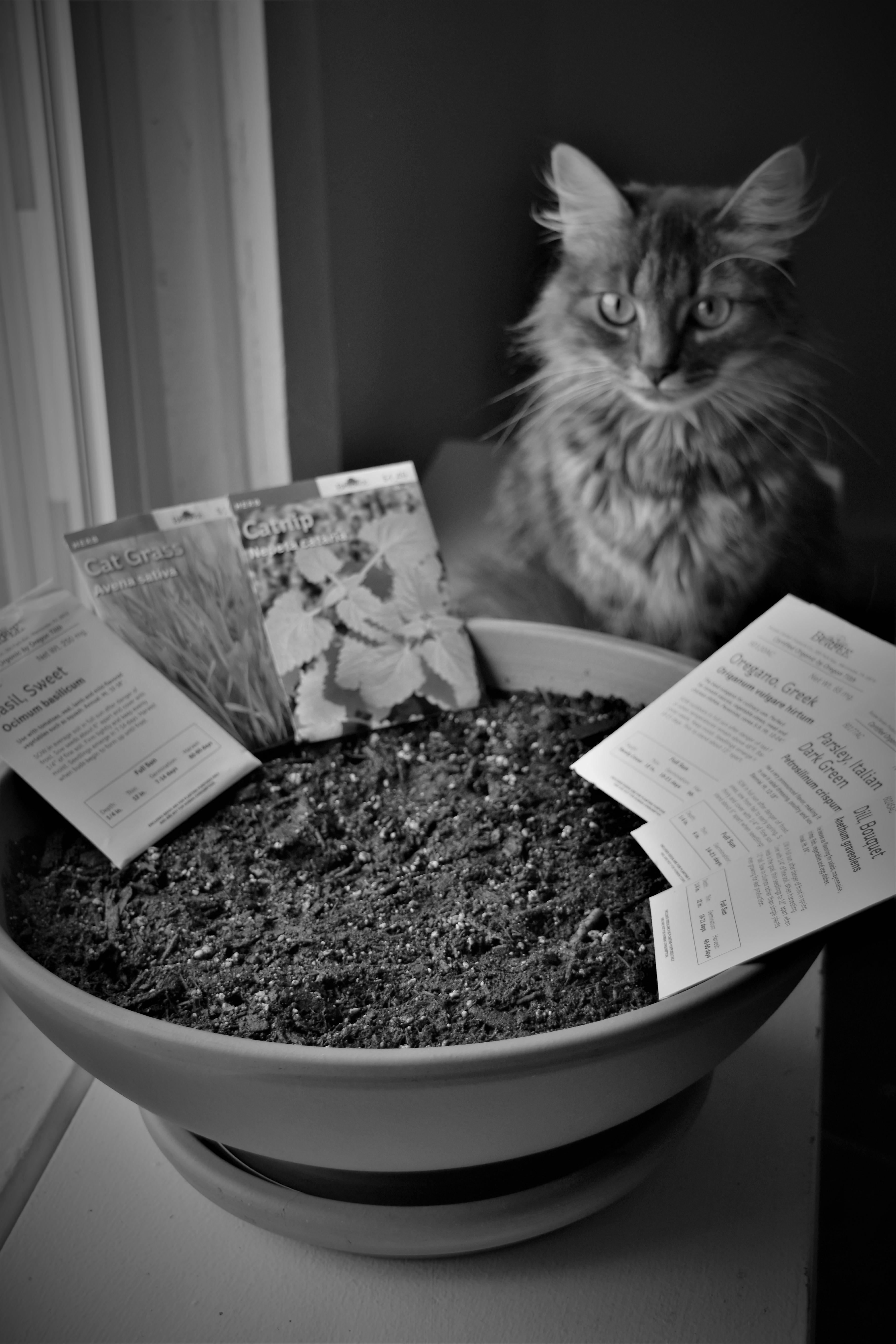 Kitty garden