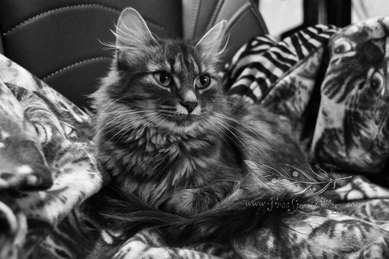 Kitty in a Kitty Blanket