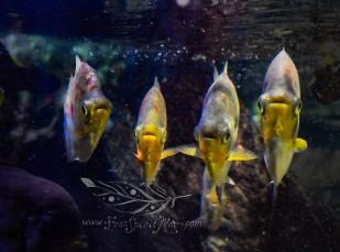 New England Aquarium (10)