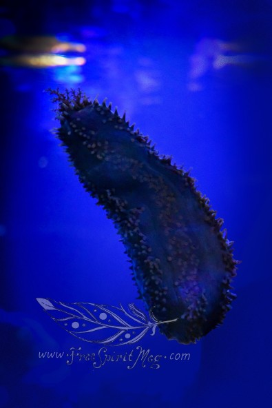 New England Aquarium (12)