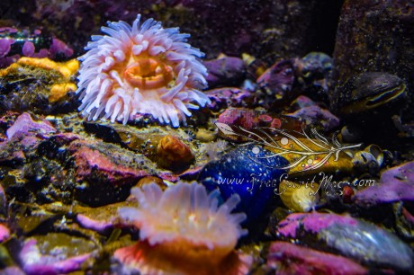 New England Aquarium (15)