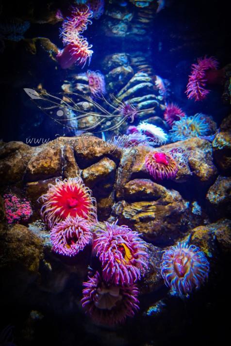 New England Aquarium (16)