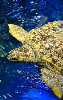New England Aquarium (18)