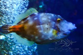 New England Aquarium (20)
