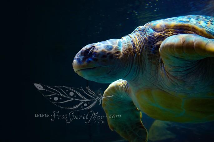 New England Aquarium (21)