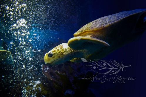 New England Aquarium (22)
