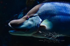 New England Aquarium (23)