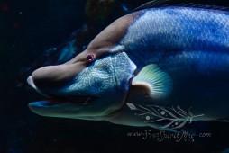 New England Aquarium (23)