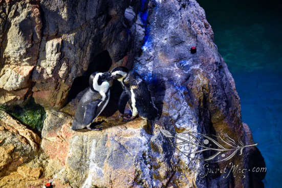 New England Aquarium (25)