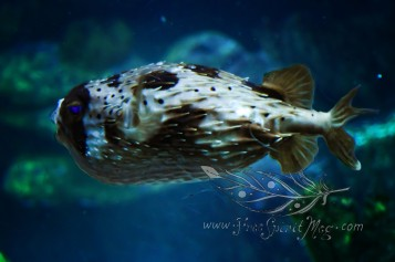 New England Aquarium (26)