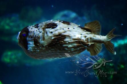 New England Aquarium (26)