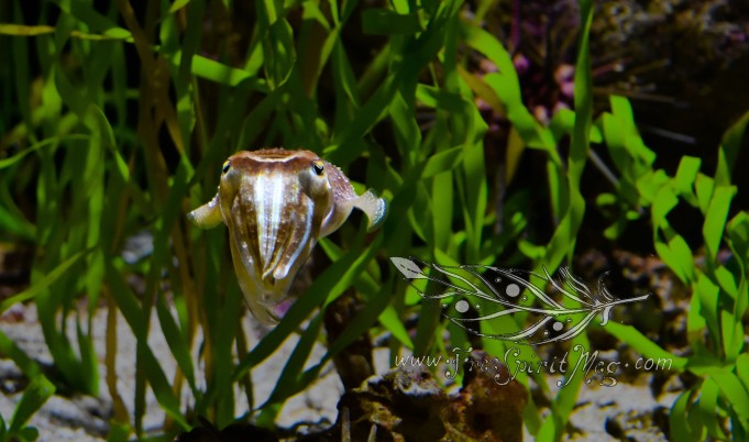 New England Aquarium (27)
