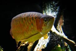 New England Aquarium (3)