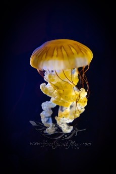 New England Aquarium (33)