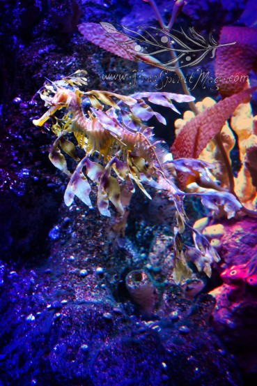 New England Aquarium (4)