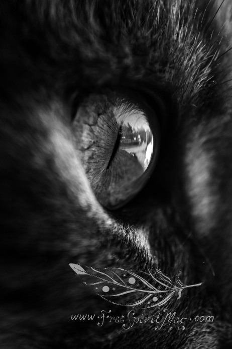 Through Kitten Eyes