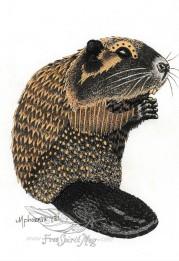 Beaver Totem Color