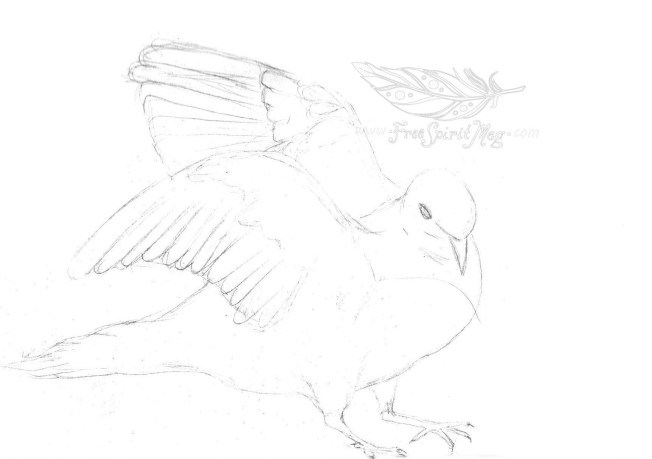 Morning Dove Sketch