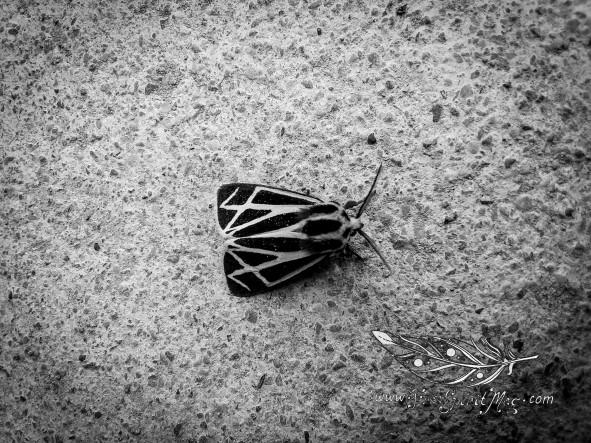 Zen Moth.jpg