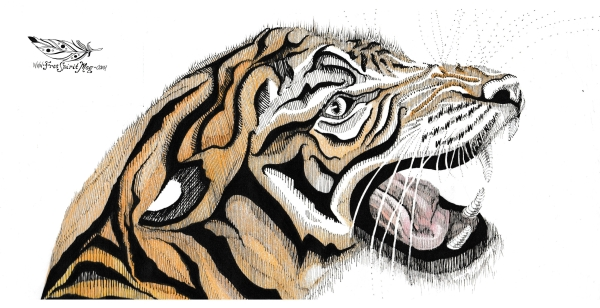 tigerwip-wm.jpg